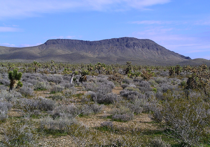 A desert with sagebrush and breen cacti plants.